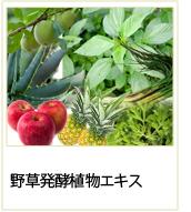 野草発酵植物エキス