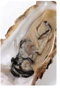 【牡蠣エキス】亜鉛ナンバー1食品