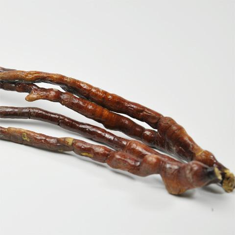 鹿角霊芝(ロッカクレイシ)
