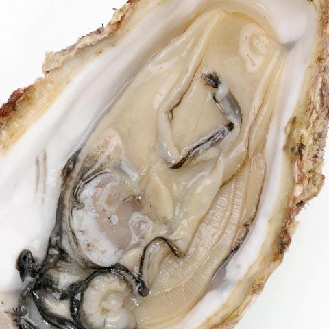 広島産牡蠣エキス